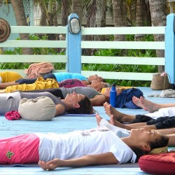 cours de yoga collectif ou particulier